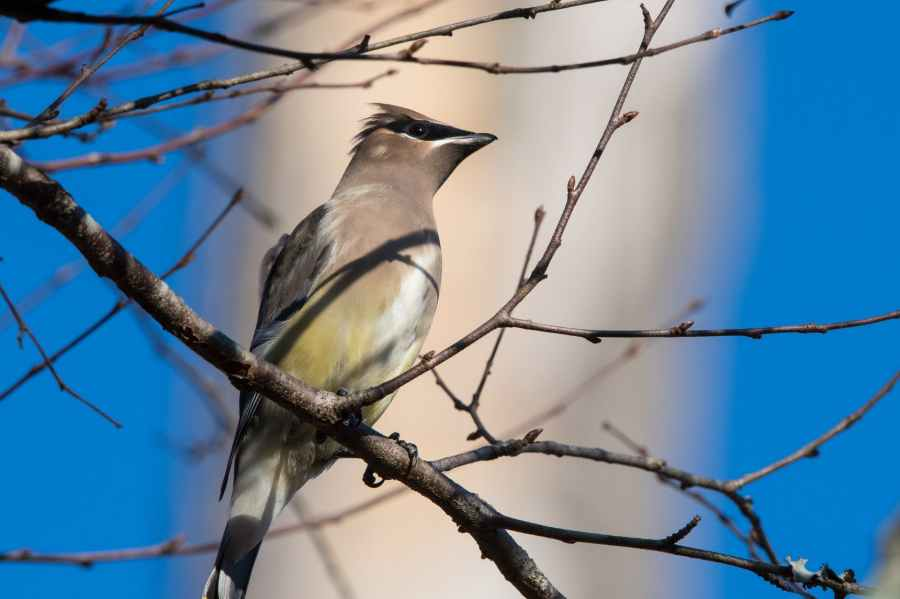 gray bird perching on tree branch