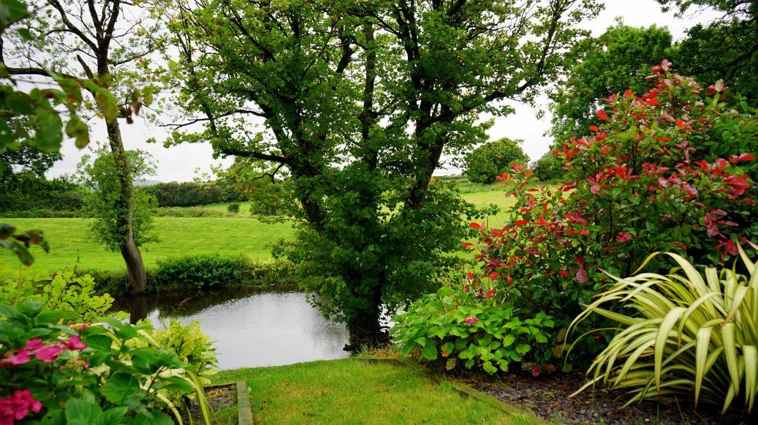 bloom-blooming-country-145685.jpg