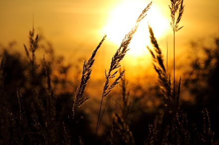 agriculture-black-blur-248824