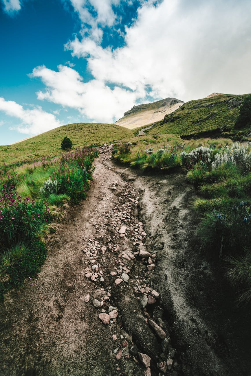 pathway between green grass field